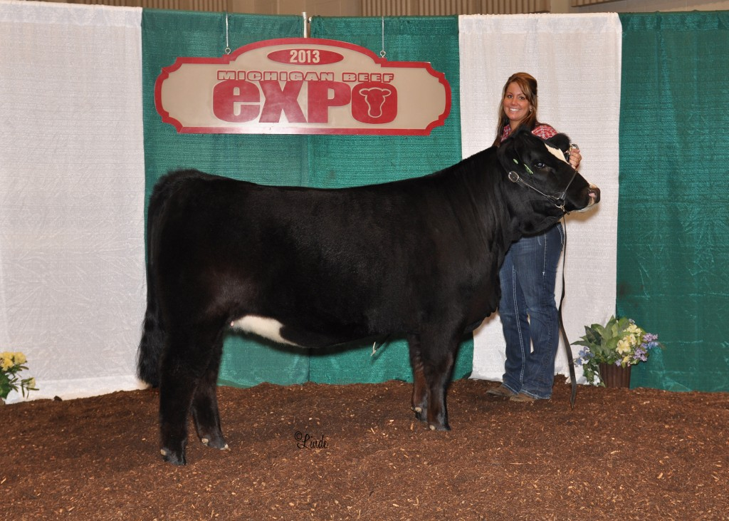 Champion Simmental Heifer 2013 MI Beef Expo