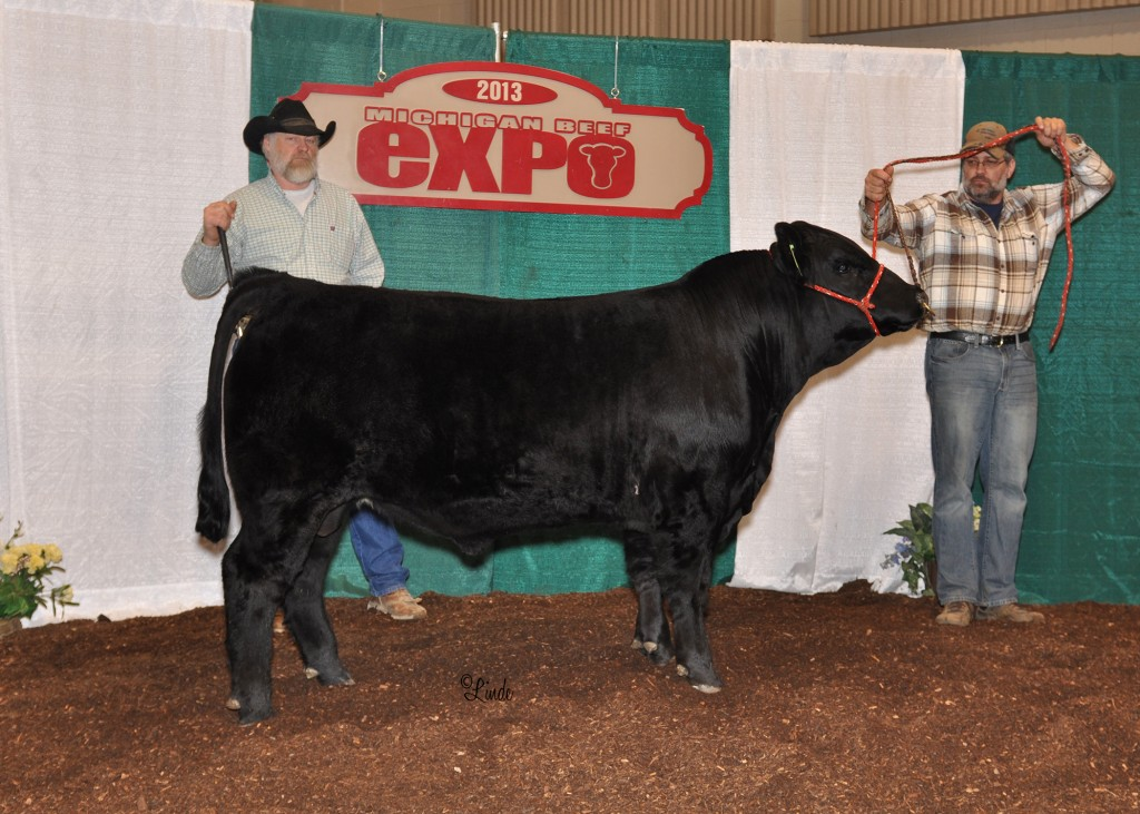 Reserve Champion Simmental Bull 2031 MI Beef Expo
