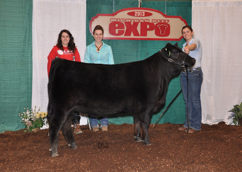 Reserve Champion Simmental Heifer 2013 MI Beef Expo